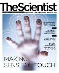 The Scientist Magazine continues cover the senses with Touch